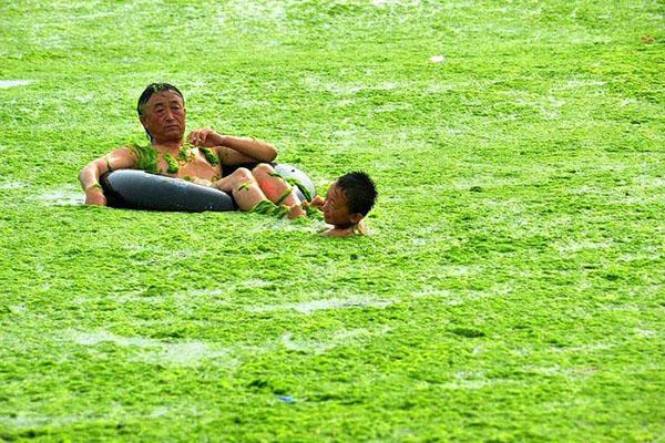 Водорості на узбережжі Циндао. Китайська провінція Шаньдун. Фото: liveinternet.ru