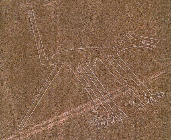 Собака. Фото: atlasobscura.com