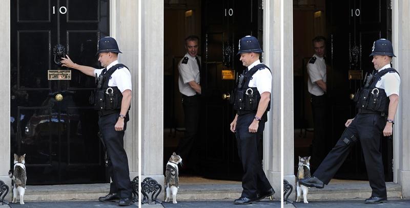 Кот по кличке Ларри ― один из самых узнаваемых и «влиятельных» котов в мире, игнорирует свои обязанности. Фото: Carl Court/Getty Images