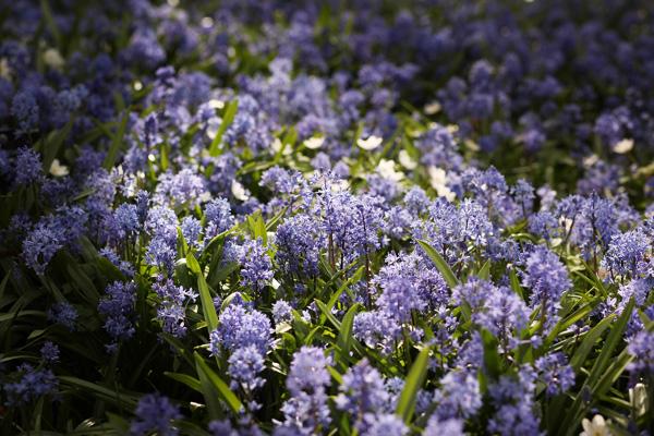 Королевский ботанический сад Кью Гарден, Великобритания. Фото: Peter Macdiarmid/Getty Images