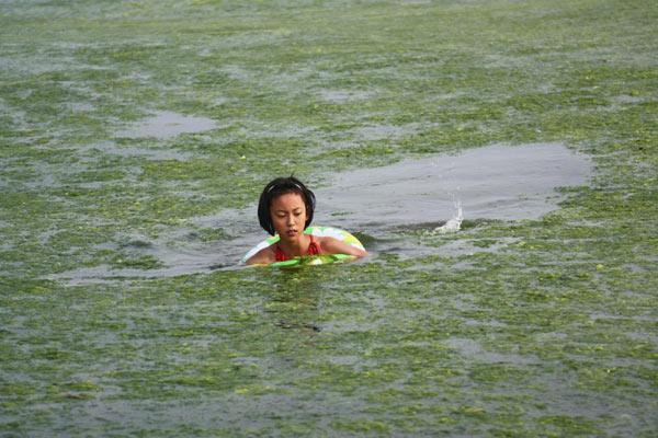 Водорості на узбережжі Циндао. Китайська провінція Шаньдун. Фото: blogspot.com