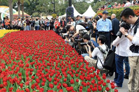 Тюльпаны на ежегодной Гонконгской выставке цветов. Фото: У Лянью/Великая Эпоха