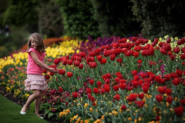 Лондон, Англія. Парк Сент-Джеймс. Фото: Dan Kitwood / Getty Images