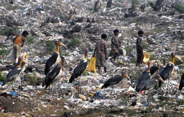 Бідняки збирають на сміттєзвалищі придатні для користування речі. Провінція Ассам, Індія. Фото: BIJU BORO / AFP / Getty Images