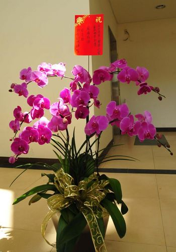 Президент Тайваню Ма Інцзю прислав квіти і вітальну листівку з побажанням успішного проведення конкурсу китайських вокалістів. Фото з epochtimes.com