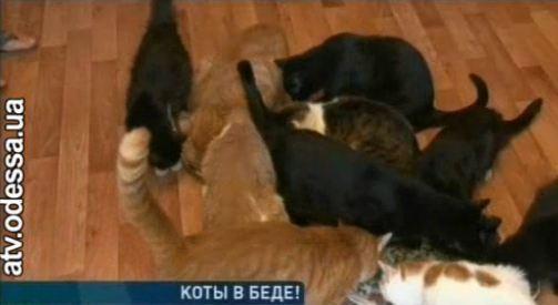 В Одесі після смерті господарки 20 котів залишилися без нагляду