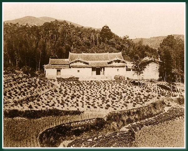 Чайна плантація. Місто Фучжоу за часів китайської династії Цін. Фото: Теодор Джонс