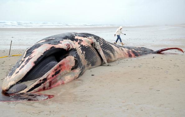 В Новой Зеландии расстреляли выбросившуюся на берег стаю китов