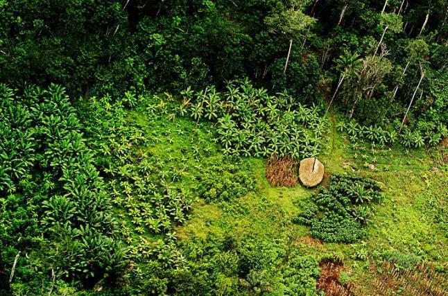 Поля местных жителей на берегу Амазонки. Фото: Eduardo Rizzo/The Epoch Times En Espanol