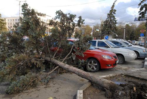 Дерево, упавшее на автостоянку в Симферополе. Фото: Владимир Бородин/Великая Эпоха