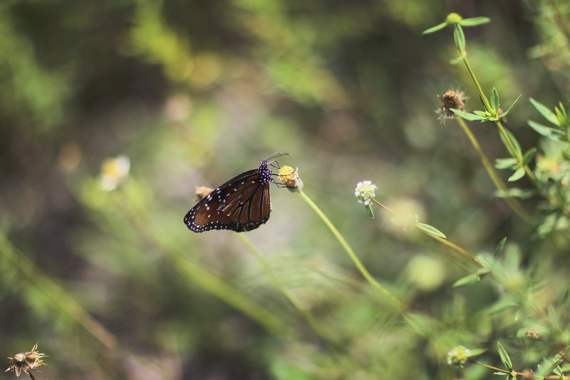 Метелик. Національний парк Еверглейдс, Флорида. Фото: Joe Raedle/Getty Images