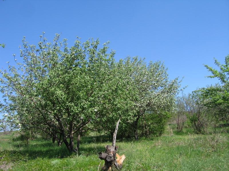 С правой стороны каньона, находятся заброшенные сады, слева ― зелёная долина, мягкие холмы и овражки, где можно увидеть куски и пеньки араукарий. Фото: Милостнова Росина/The Epoch Times Украина