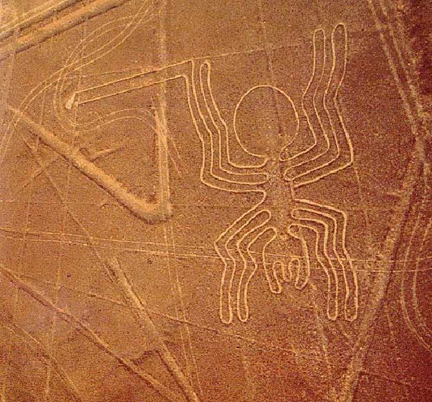 Павук. Фото користувача herbizid на livejournal.com