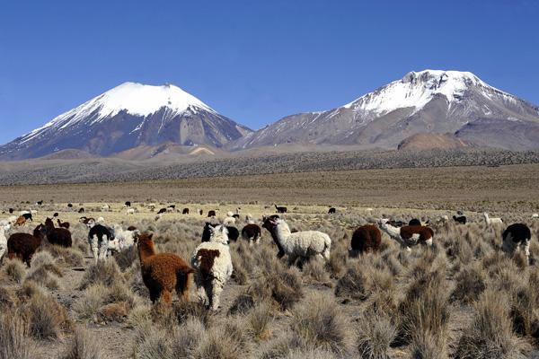 Сахама, Боливия. Фото: AIZAR RALDES / AFP / Getty Images