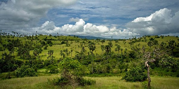 Національний парк на індонезійських островах. Навколишнє середовище комодського варана. Фото: topic.lt