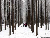 Через затяжне стихійне лихо великі втрати несе і лісове господарство Китаю. Фото: Getty Images