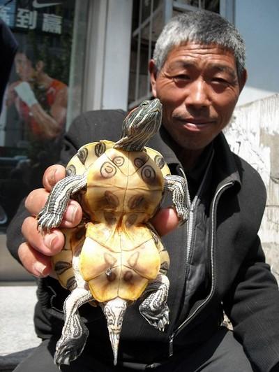 «Черепаха-гарбуз» із міста Хуайбей провінції Аньхой. Фото: The Epoch Times