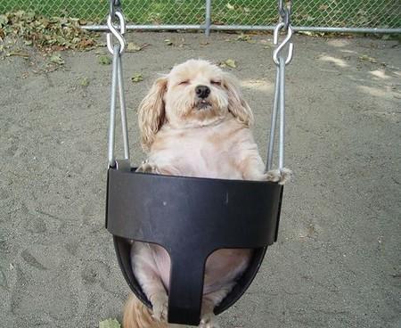 Як і де сплять кішки та собаки. Фото з secretchina.com