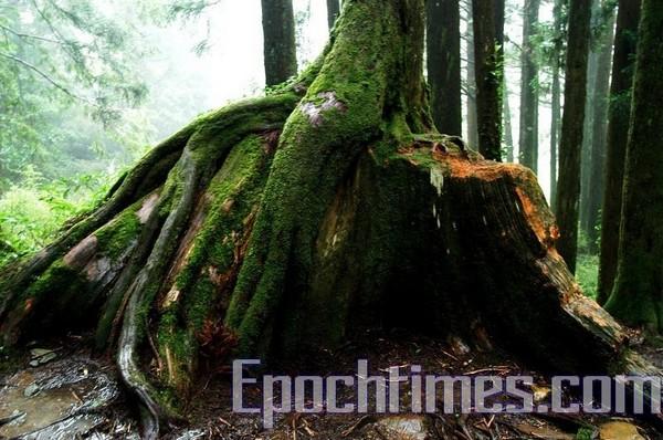 Флора гір Алішань. Фото: The Epoch Times