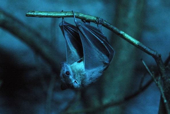 В США и Канаде идёт вымирание летучих мышей