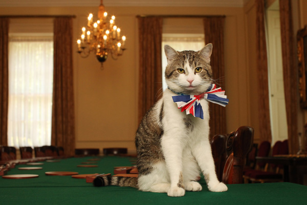 Кіт Ларрі, що займає посаду королівського кота-мишолова на Даунінг-стріт. Фото: James Glossop - WPA Pool / Getty Images