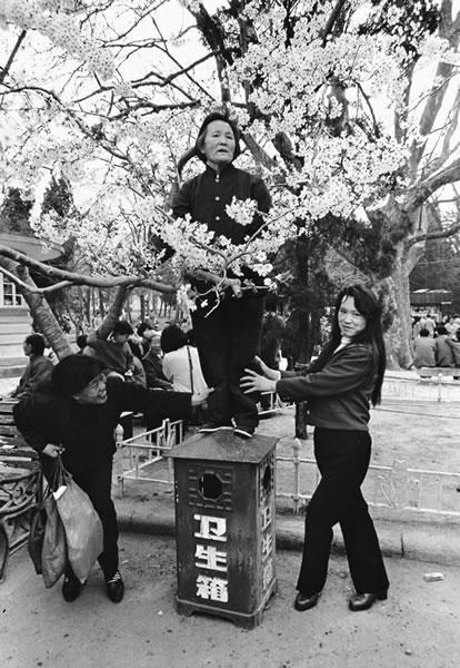 Пожилая женщина захотела сфотографироваться на фоне цветов вишни. Город Циндао провинции Шаньдун. 1990 год. Фото: Wu Zhengzhong