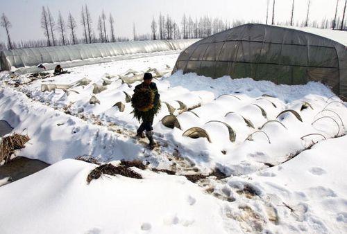 За четыре дня снегопада в некоторых районах города Ухань слой снега достиг 25 см. Фото: China Photos/Getty Images
