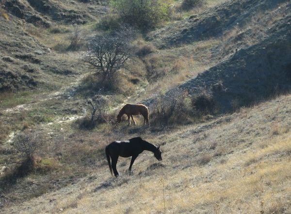 Крым. Горы. Две лошади. Фото: Ирина Рудская/ The Epoch Times