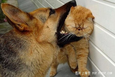 Можливо, тварини колись були людьми? Фото з secretchina.com