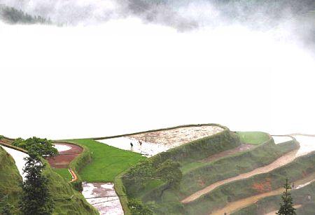 Крестьяне обрабатывающие рисовое поле. Фото: Getty Images