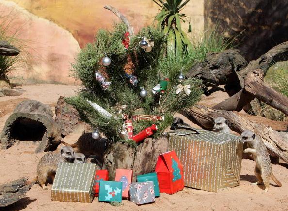 Звірі щорік отримуватимуть подарунки. Фото: TORSTEN BLACKWOOD/AFP/Getty Images
