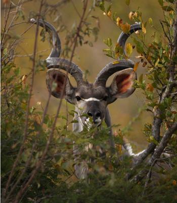Заповідник Maшату. Фото: Cameron Spencer / Getty Images