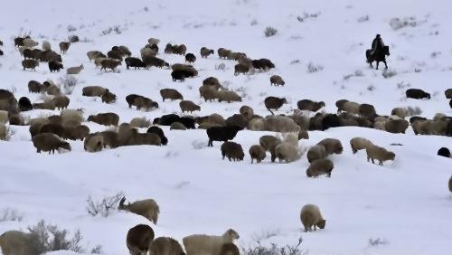 На Сіньцзян-уйгурський автономний район обрушилися сильні снігопади. 8 січня 2010 р. Фото з epochtimes.com