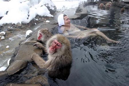 Унікальний мавп'ячий курорт не має аналогів у світі, сніжні мавпи зробили його своєю вотчиною. Кажуть, що гаряче джерело знімає нервову втому і головний біль. Фото: Koichi Kamoshida/Getty Images
