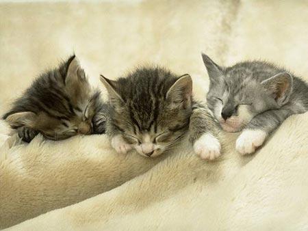 Как и где спят кошки и собаки. Фото с secretchina.com