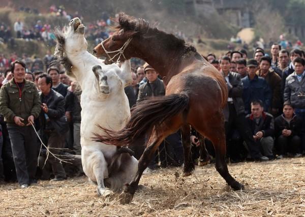 Кінські бої. Провінція Гуансі. Китайська Народна Республіка. 18 лютого 2011 р. Фото: ChinaFotoPress/Getty Images