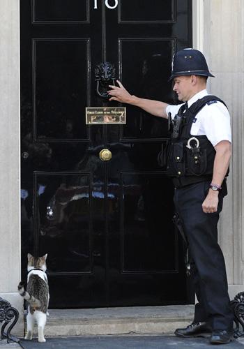 Кіт Ларрі, що займає посаду королівського кота-мишолова на Даунінг-стріт. Фото: CARL COURT / AFP / Getty Images