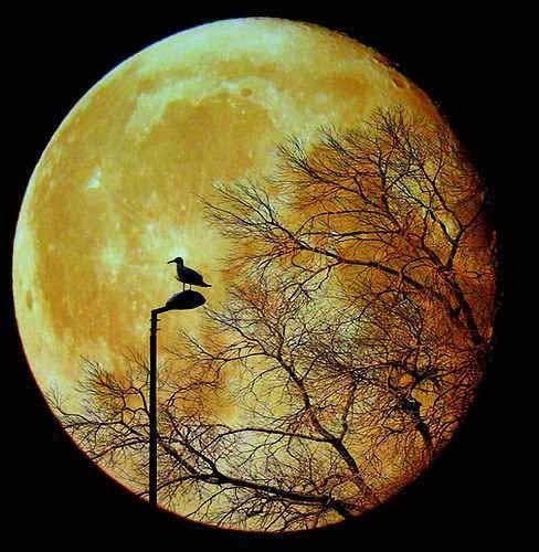 Фото з secretchina.com