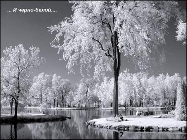 Вітання з Новим 2010 роком Тигра. Фото: pixdaus.com
