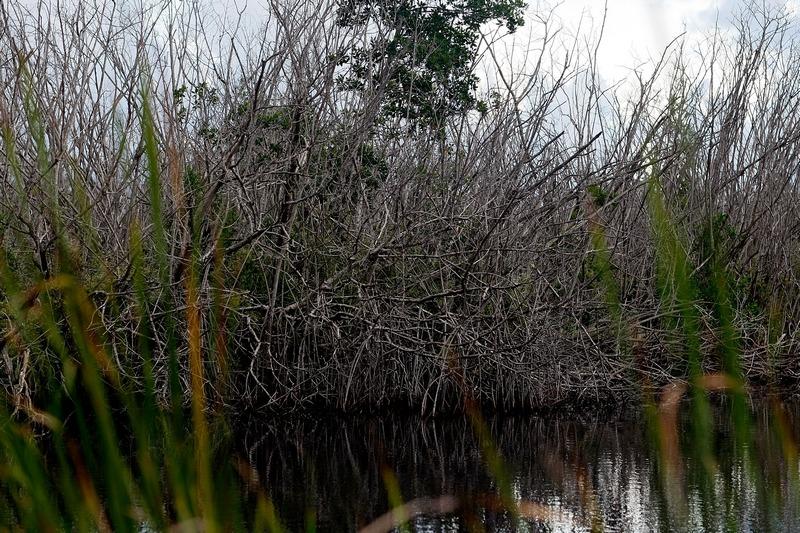 Національний парк Еверглейдс, Флорида. Фото: Joe Raedle/Getty Images