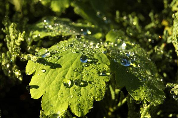 Новый цикл удивительных сезонных перемен в природе можно увидеть в осеннем ботаническом саду в Киеве. Фото: Антон Поднебесный/The Epoch Times