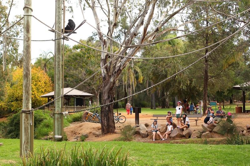Посетители любуются коатом (паукообразной обезьяной). Зоопарк «Западные равнины Таронга». Даббо, Австралия. Фото: Mark Kolbe/Getty Images