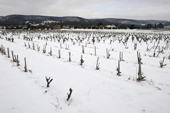 В России ущерб от холодов непредсказуем ― аграрии