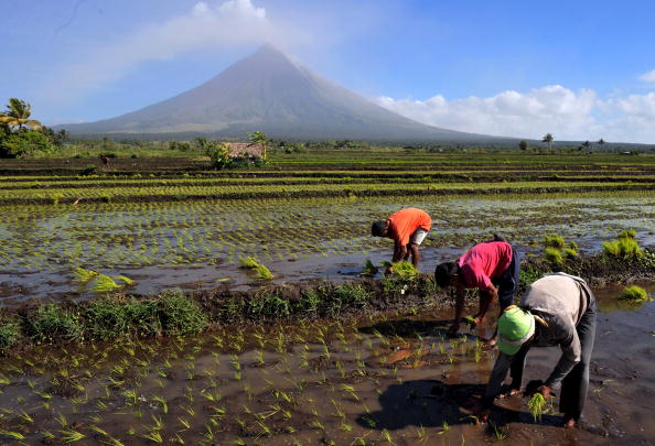 Несмотря на извержение вулкана Майон, местные фермеры неподалеку продолжают сажать рис. Филиппины. Фото: TED ALJIBE/AFP/Getty Images
