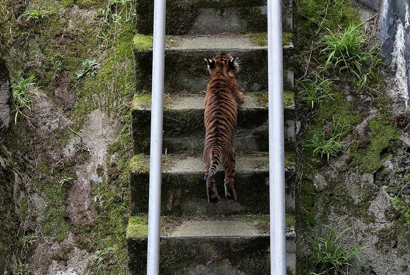 По лестнице — домой. Фото: Justin Sullivan/Getty Images