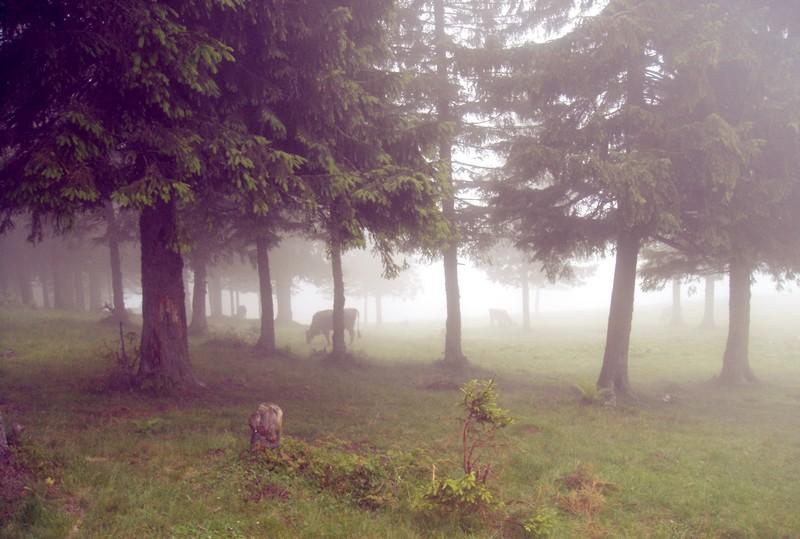 Летний отдых в Карпатах: горы в облаках. Фото: Алина Варфоломеева/Великая Эпоха