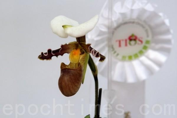 Выставка орхидей в Тайване. Март 2011 год. Фото: The Epoch Times