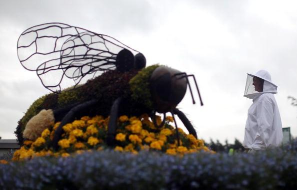 Выставка цветов Королевского садоводческого обществаФото: Christopher Furlong/Getty Images