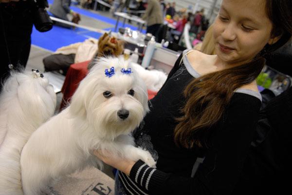 Международная выставка собак в Киеве 5 декабря 2009 года. Фото: Владимир Бородин/The Epoch Times