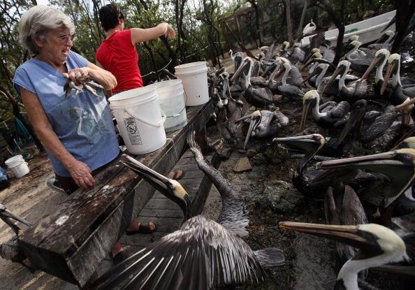 Центру реабилитации диких птиц, в котором содержат больных и травмированных птиц, придется закрыться. Причина - отсутствие финансирования. США. Фото: Joe Raedle/Getty Images